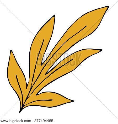 Beautiful Autumn Carved Yellow Leaf, Chestnut, Doodle Vector Element, Black Outline