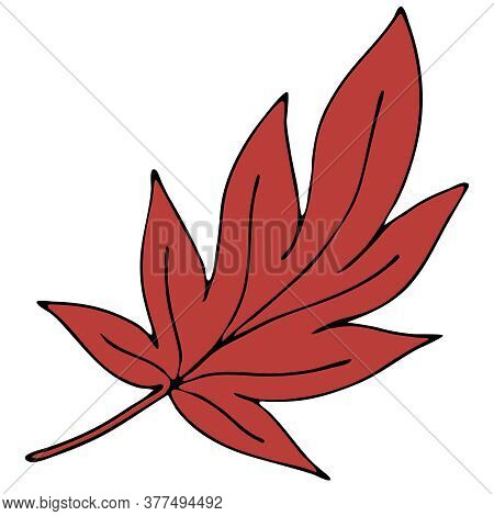 Beautiful Autumn Carved Red Leaf, Chestnut, Doodle Vector Element, Black Outline