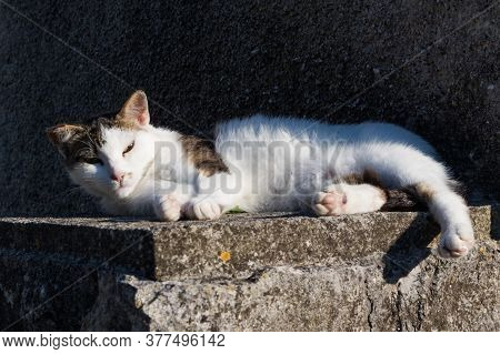Sleepy Cute Domestic White Cat Lying On Cement Wall In Front Of House Looking In Camera