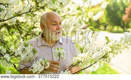 Gardening Hobby. Botanist Examine Tree. Curiosity To Botany. Explore World Around. Pensioner In Gard