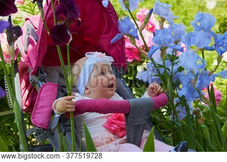 Baby In Iris Flowers, Baby Sitting In A Stroller In Flowers, Baby Looking At Flowers With Open Mouth