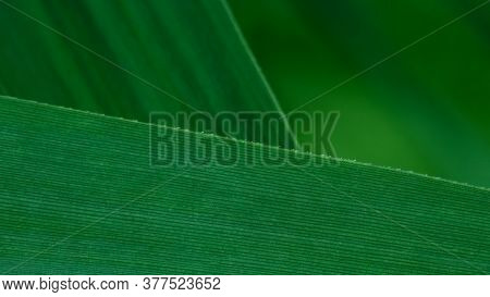 Deep Green Grass Blades Composition For Background