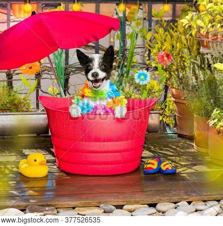 Dog In A Bathtub Or Bucket Refreshing In Summer At The Balcony With Umbrella On Vacation