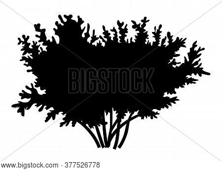 Silhouette Bush With Leaves Isolated On White Background. Lush Wide Bush Several Thick Branches Wide