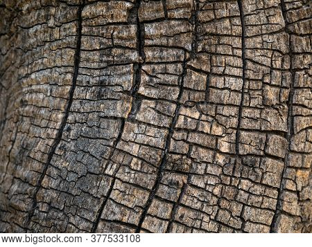 Tree Trunk Blank Mockup For Display Text. Copy Space For Sign On Natural Wooden Background. Old Wood