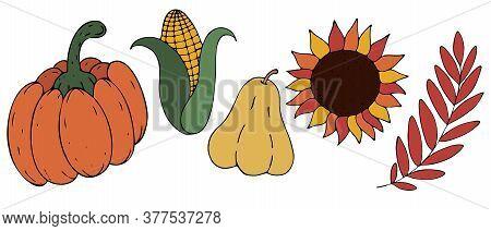 Autumn Harvest From The Garden - Pumpkin, Corn, Squash, Sunflower, Mountain Ash, Vegetables, Freehan