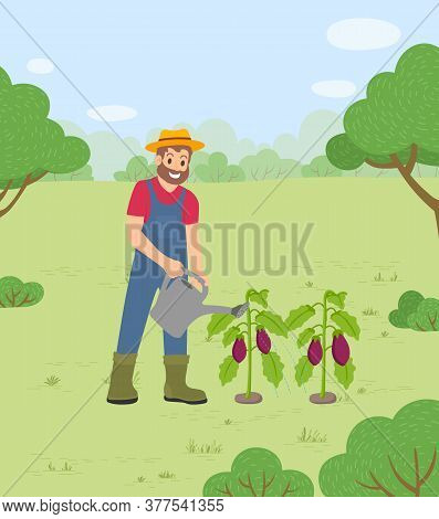 Man Working On Farm Using Watering Can To Care For Eggplants. Growing Aubergine At Land. Farming And