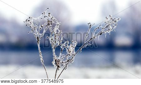 Frost-covered Dry Shoots Of Plants On A Background Of The River