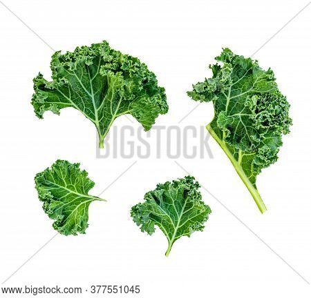Creative Layout Made Of Kale Leaves. Flat Lay. Raw Kale Curly  Salad Leaf Isolated On White Backgrou