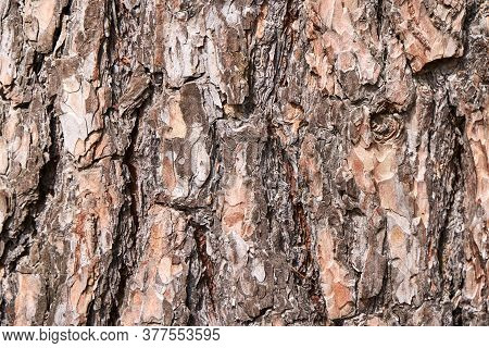 Bark Tree Texture. Brown Wood Background. Rough Forest Pattern. Abstract Outdoor Plant Design. Hardw