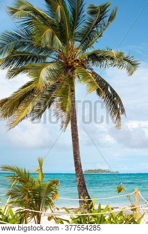 Palm Tree At The Main Beach Of San Andres Island And Johnny Cay In The Back, Colombia, South America