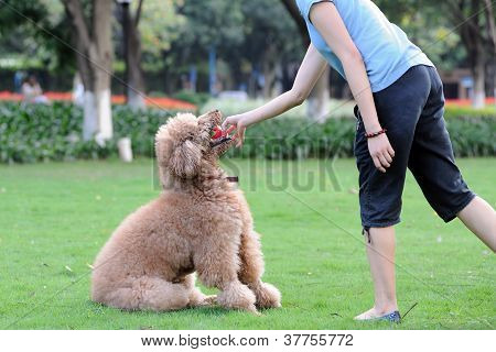 Master Playing With Dog