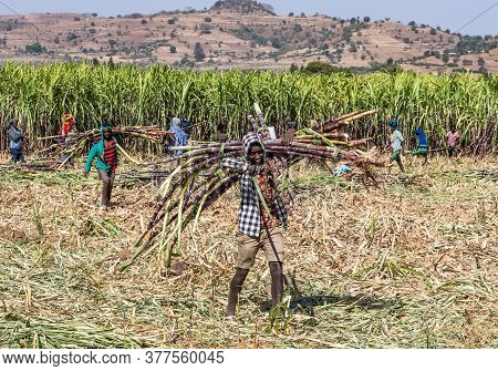 Tis Issat, Ethiopia - Feb 05, 2020: Ethiopian Peasants Working In The Fields During The Harvest Near