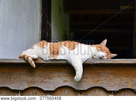 Red And White Cat Sleaping On The Edge Of The Porch