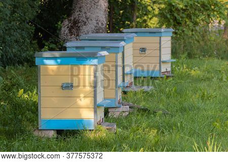 Row Of Yellow And Blue Beehives In Green Meadow. Hives Standing In Row On An Apiary With Bees In Fie