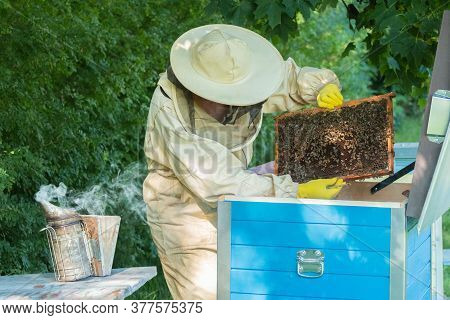 Beekeeper Removing Honeycomb From Beehive. Person In Beekeeper Suit Taking Honey From Hive. Farmer W