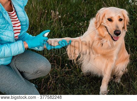 Girls Hand Holding Dogs Paw To Disinfect With A Hand-washing Spray. Paws Care, Health Care