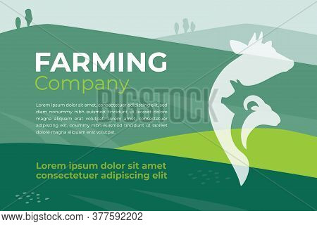 Design Template For Farming Company, Agriculture, Livestock Business. Banner With Agricultural Field