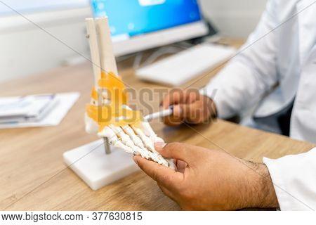 Feet Bones Model At Doctor S Table. Educational Medical Artificial Foot Model. Detailed Bones Of The