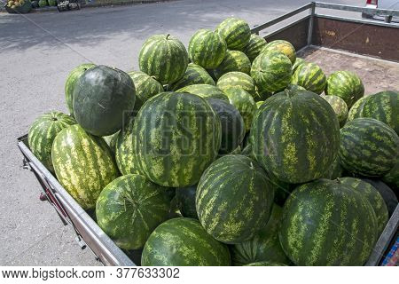 Fast Sale Of Watermelons On The Street Near Buildings With A Lot Of Residents. In Addition To Waterm