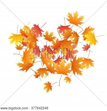 Maple Leaves Vector Background, Autumn Foliage On White Illustration. Canadian Symbol Maple Red Yell