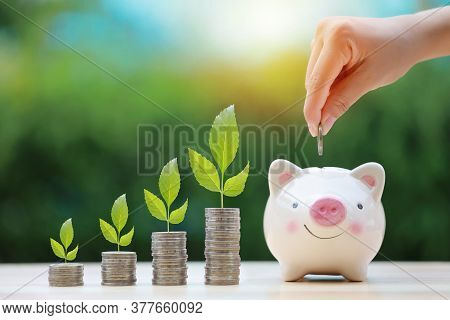 Woman Hand Putting Coin Into Pink Piggy Bank On Wooden Desk With Plant Grow On Stacking Coin, Meanin