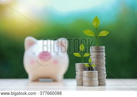Business Investment And Saving Growth For Advertising Concept. Plant Grow On Stacking Coin On Wood D