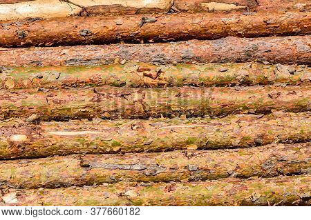Background Of Many Tree Logs. Wooden Pattern