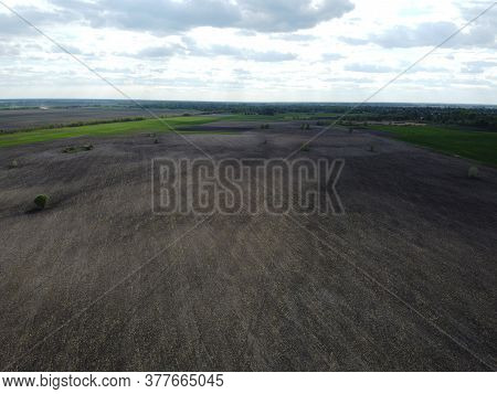 Small Trees In The Middle Of Arable Fields, Aerial View. Agricultural Landscape.