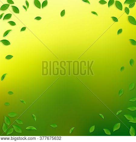 Falling Green Leaves. Fresh Tea Chaotic Leaves Flying. Spring Foliage Dancing On Yellow Green Backgr