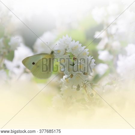 Beautiful Golden Nature Background.Floral Art Design.Macro Photography.Abstract Pastel Landscape with Copy Space.Butterfly and Field.Summer Butterfly on a White Flower.Creative Artistic Wallpaper.Tranquil Scene.Yellow Color.Jasmine Flowers.