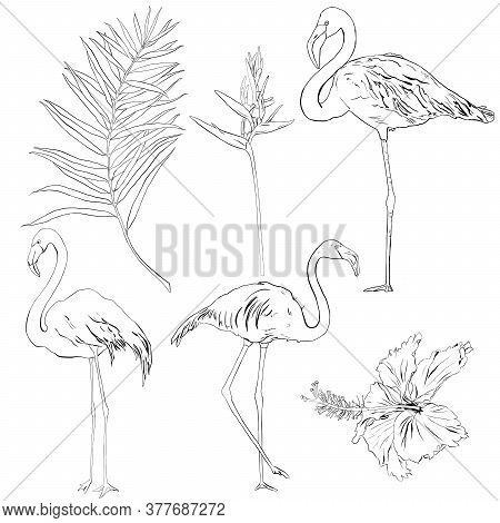Vector Tropical Linear Set With Flamingos, Palm Leaves, Hibiscus And Strelitzia. Hand Drawn Birds An