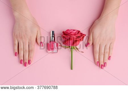 Beautiful Solid Dark Pink Nails. Nail Polish And Rose Flower Of The Same Color