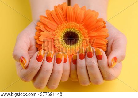 Gerbera In Womans Hands. Nails Painted Orange And Red Colors