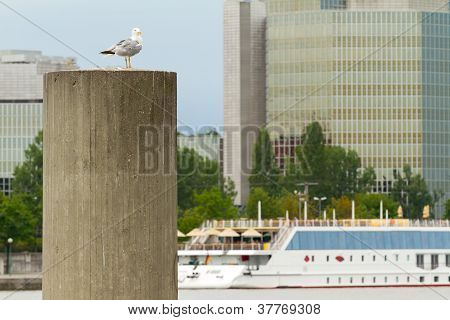 Seagull sitting on a pole against the river Danube in Vienna. poster