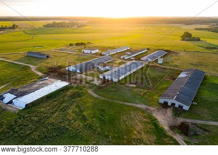 Agriculture Livestock Top View From A Drone