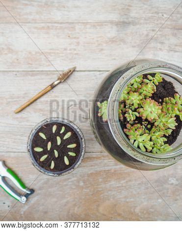 Table With Gardening Tools, Big Glass Jar With A Succulent Sedum Rubrotinctum Rosea And A Small Pot
