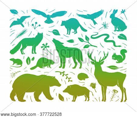 Vector Composition With Forest Animals Collection In Rectangle Frame. Flat Animals Silhouettes In Gr