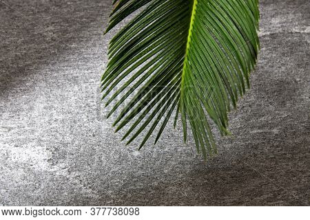 nature, eco and flora concept - green moist palm tree leaf