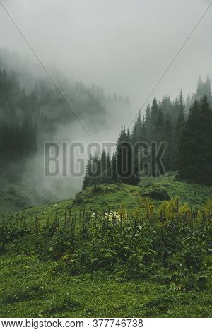 Meadow With Flowers On Background Of Mystical Spruce Mountain Forest On The Hillside Covered With Th