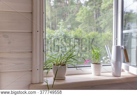 White Window With Mosquito Net In A Rustic Wooden House Overlooking The Garden. Houseplants And A Wa