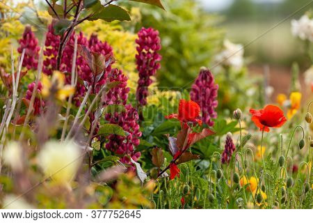 Stunning Garden Flowers Growing In A Flowerbed. Seasonal Plants During Summer In England