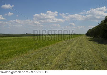 View Of A Green Clover Field With Partially Cut Grass. Agricultural Mowing In Summer. Nature, Vegeta