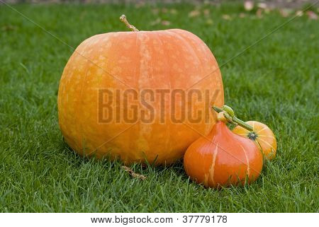 Big And Small Pumpkins