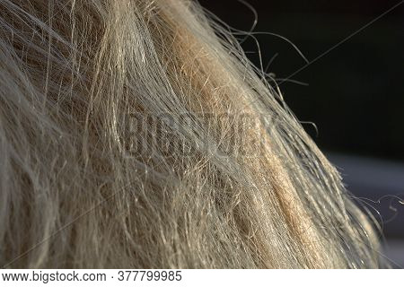 Light Healthy Hair In The Natural Light Of The Sun