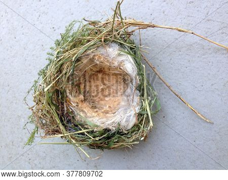 Birds Nest Isolated Small Natural Nesting Home Of Bird Family For Egg