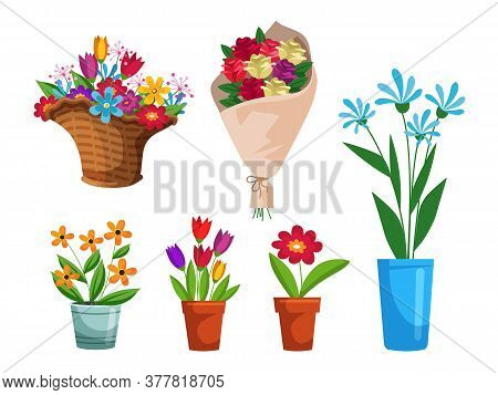 Isolated Beautiful Flower Bouquet In Wrapping And Blooming Plant In Clay Or Plastic Flowerpot, Wicke