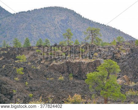 Sunset Crater Volcano Lava Pool, Formed From The Bonito's Lava Flow. Ponderosa Pine Trees Growing On