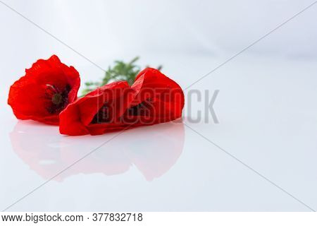 Poppies On A White Background In Selective Focus. Beautiful Bouquet Isolated On A White Background.