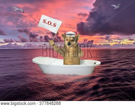 The Dog In Sailor Clothing Is Drifting In The Bathtub On The Open Sea After Shipwreck. He Holds A Si